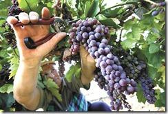 5 шагов, чтобы собрать осенью богатый урожай в интернет бизнесе
